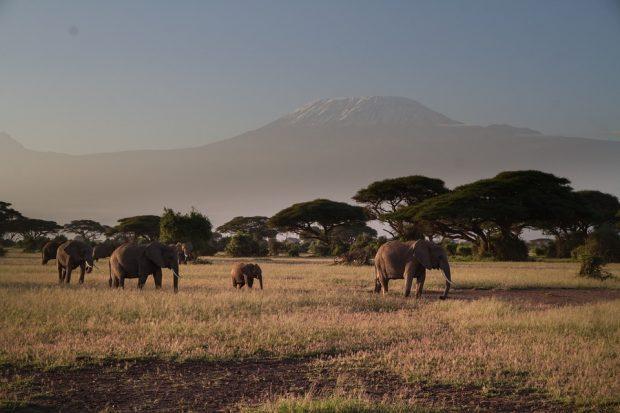 Un dépaysement garanti lors d'un séjour au Kenya